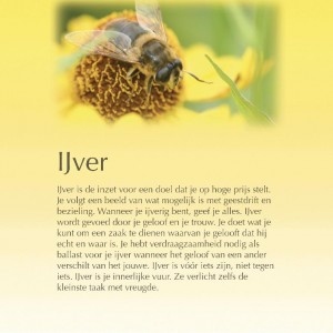 ijver-page-001